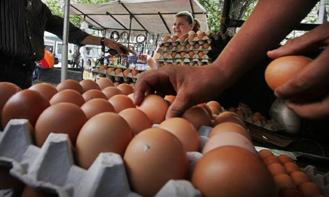 Un cartón de huevos por diez meses de trabajo: el precio inalcanzable para muchos